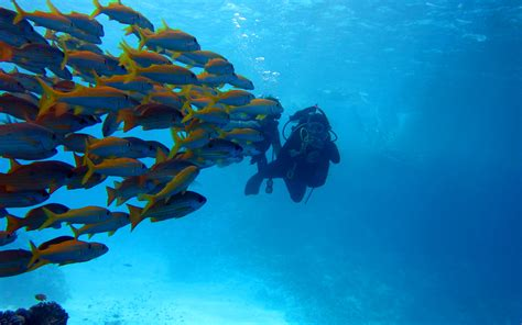 incredible diving experiences   world