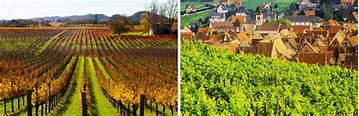 French Wines Vs California Wines: What's the Difference ...