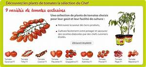 Comment Tuteurer Les Tomates : maladies et parasites de la tomate ~ Melissatoandfro.com Idées de Décoration