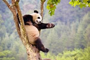 Schöne Momente Bilder : sch ne momente des jahres 2015 in chinas freier natur ~ Orissabook.com Haus und Dekorationen