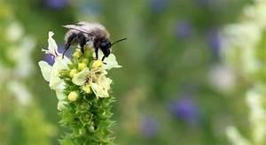 Warum Machen Bienen Honig : petitionen f r bienen honig und bienen ~ Whattoseeinmadrid.com Haus und Dekorationen