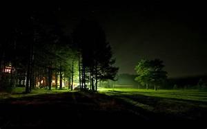 Night, Forest, Hd, Wallpaper