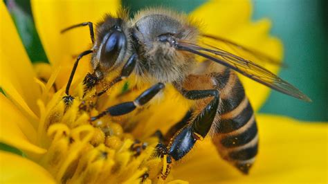 Images Of Bees Iwonder Is A Bee As Smart As A Sat Nav