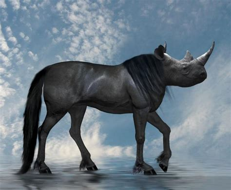 horse hybrid rhino animals funny sea weird