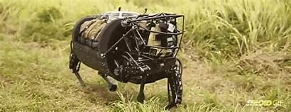 Robot Dog Horse Its Action Taste Gets