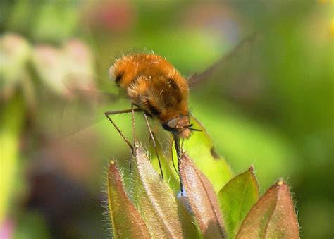 hummingbird insect 10 flickr photo sharing