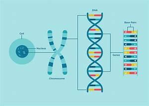 Happy National Dna Day  U2013 Color Genomics