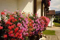 Balkonkasten Bepflanzen Südseite : christrose im balkonkasten so f hlt sie sich pudelwohl ~ Indierocktalk.com Haus und Dekorationen
