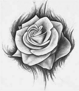 Drawn rose - Pencil and in color drawn rose