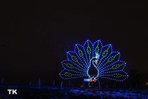 peacock christmas ideas