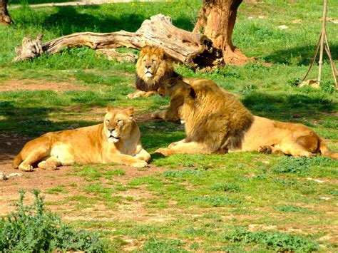 Ingresso Zoo Fasano by Zoo Safari Fasano
