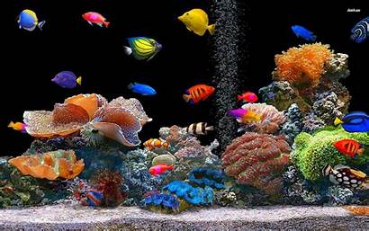 Aquarium Pc Fish Desktop Tropical Animal Oscar
