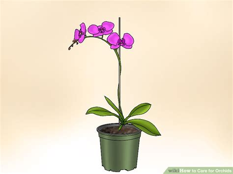 care for orchids how to care for orchids with pictures wikihow