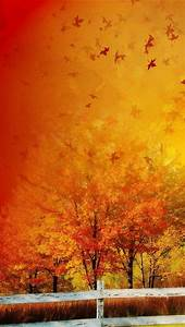 Beautiful Autumn Maple Backgrounds For Iphone 5