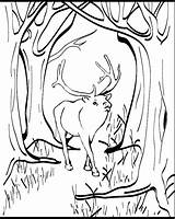 Elk Coloring Pages Printable Animal Animals Sheet Animalstown 04kb 753px Sheets Drawings sketch template