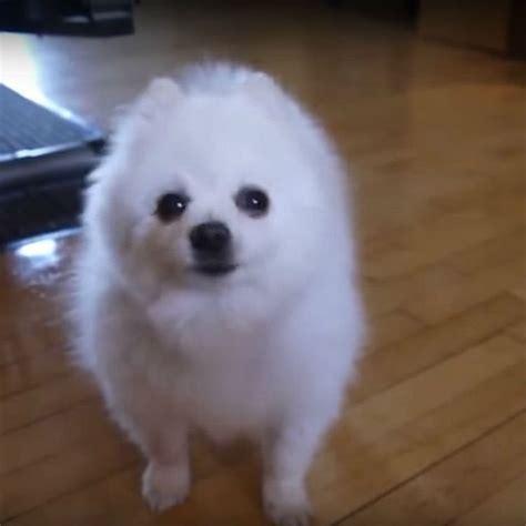 gabe  dog bork remix doggo  passed