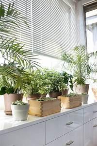 Fensterbank Dekorieren Wohnzimmer : fensterbank deko die farben der natur durch pflanzen nach hause holen zimmerurwald ~ Markanthonyermac.com Haus und Dekorationen
