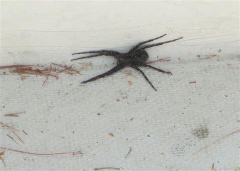 Boat Dock Spiders by Dock Spiders Winnipesaukee Forum