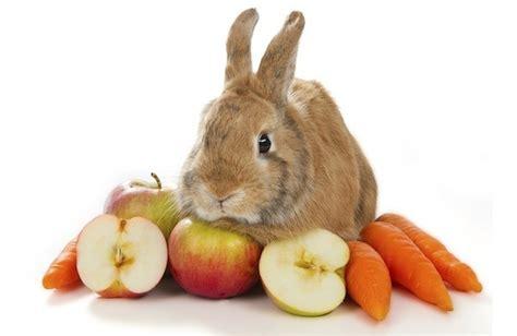 ماذا يأكل الارنب ؟