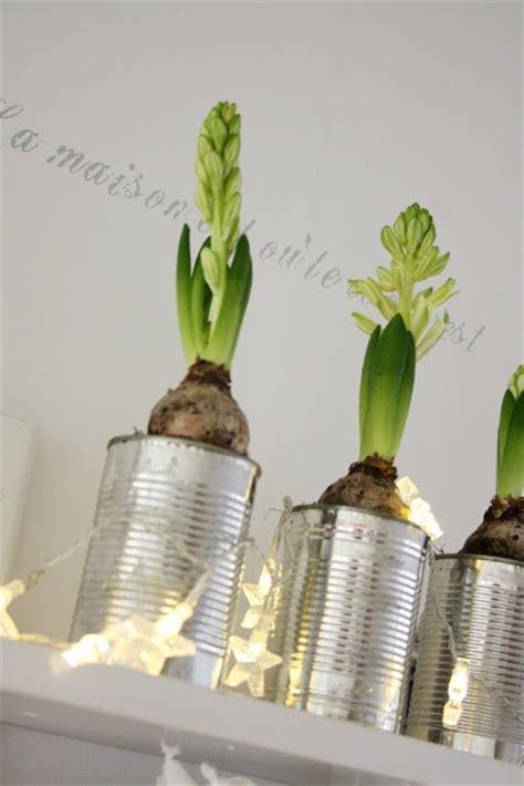 planter des jacinthes en pot c est le moment de planter des jacinthes sakarton