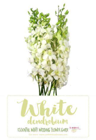 ideas  white flowers names  pinterest