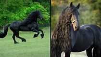 Meet Frederick The Great, World's Handsomest Horse Whose ...