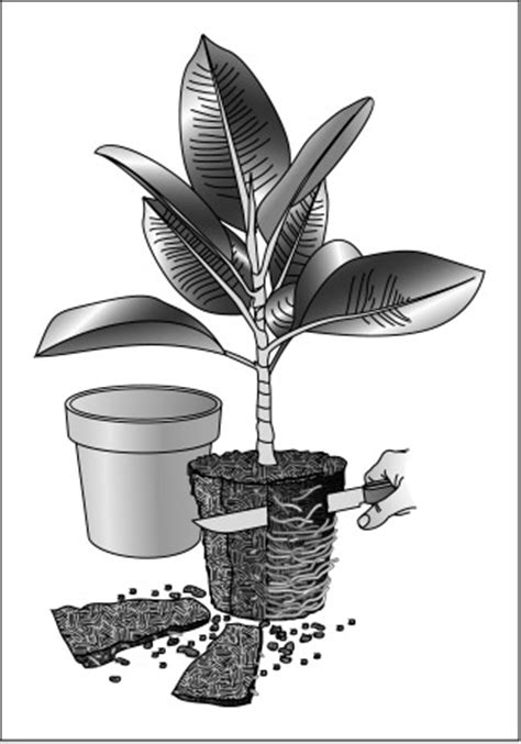 10 steps for fool proof repotting gardening tips