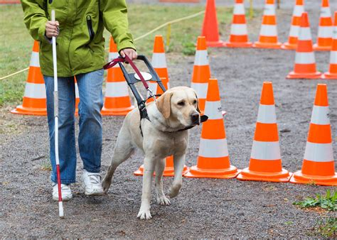 guide dog refusals   rights centre  resolution