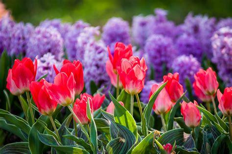 Pavasaris Kauno botanikos sode | Spring Kaunas Botanical ...