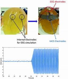 Gelatin Phantom Head Model   Top  Internal Electrodes For