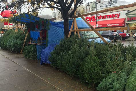 average price of a christmas tree what s the average price of a tree in new york city east side dnainfo