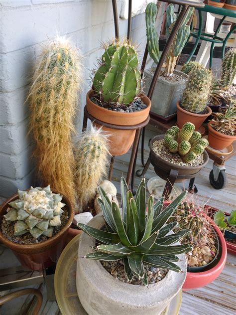 Cactus Plants Picture | Free Photograph | Photos Public Domain