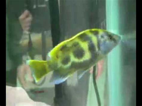 allah   miracle fish subhanallah youtube