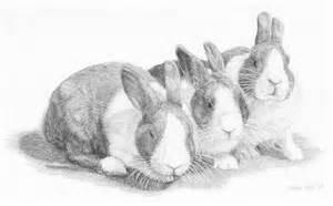 Bunny Rabbit Sketch Drawing