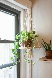 Rankhilfe Für Zimmerpflanzen : h ngende zimmerpflanzen bilder von anreizenden blumenampeln pflanzen ~ Yasmunasinghe.com Haus und Dekorationen