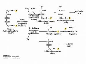 Plant Physiology 2