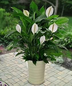 Kokoserde Für Welche Pflanzen : schattenpflanzen f r terrassen welche nicht sonnig sind welche pflanzen gedeihen dort am besten ~ Orissabook.com Haus und Dekorationen