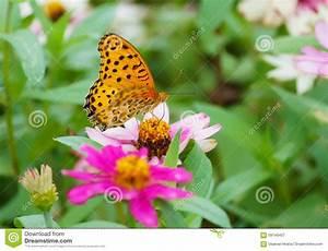 Blumen Im Sommer : sch ne blumen im sommer mit einem reizenden schmetterling stockbild bild 59149407 ~ Whattoseeinmadrid.com Haus und Dekorationen