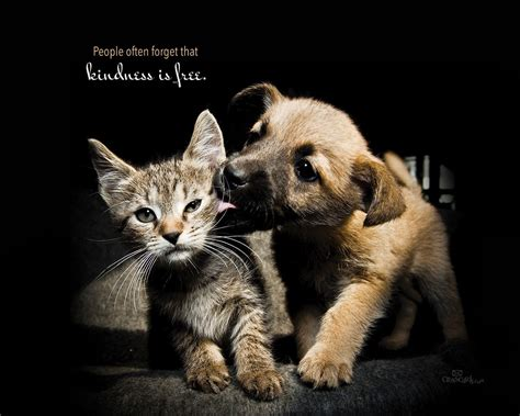 Animal Rights Wallpaper - kindness is free desktop wallpaper free backgrounds