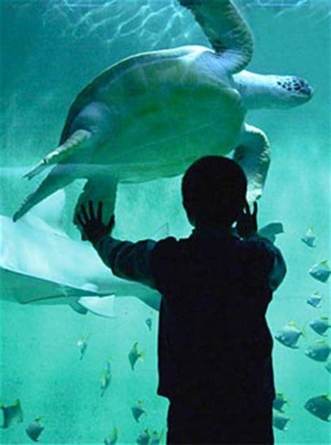 grand aquarium de grand aquarium de malo dormir au milieu des requins