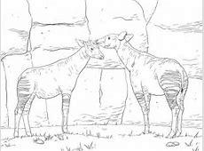 Two Okapis coloring page SuperColoringcom
