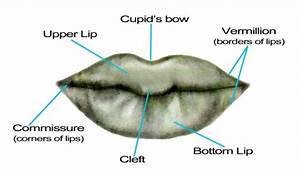 Portrait Drawing For The Ultimate Beginner  The Lips