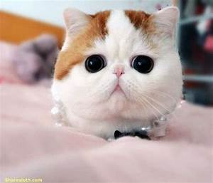 Snoopy The Cat Pictures - So Adorable - Sharesloth