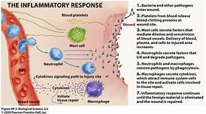 614 Best Images About Lymphatic  Immune System On Pinterest