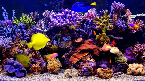 Free Animated Aquarium Desktop Wallpaper For Windows 7 - aquarium live wallpaper for windows 8 1 bedwalls co