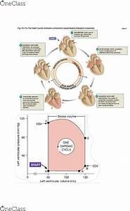 Biol 2p97 Study Guide - Fall 2014  Midterm