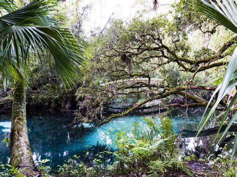 natural wonders  add   florida bucket list