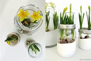 Blumenzwiebeln Im Glas : blumenf hliges zuhause teil 3 narzissen detail ~ Markanthonyermac.com Haus und Dekorationen