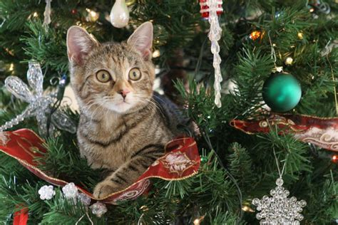 repel cat christmas tree 10 tips to help make your tree cat proof pets4homes