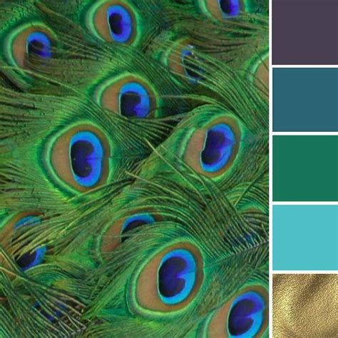 best 25 peacock color scheme ideas on peacock